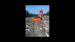 Захоронка леса ,Североенисейский район