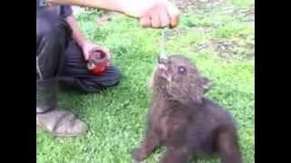 Медвежонок Тишка и варенье