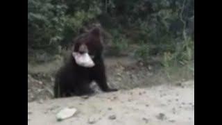 В Северо-Енисейском районе водителям пришлось буквально откупаться от медвежонка пряниками