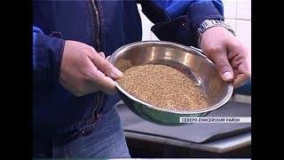 В Северо-Енисейском районе добывают почти четверть всего золота России