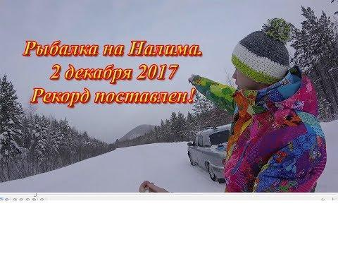 Рыбалка на Налима 2 декабря на реке Вельмо. 19 Налимов на 29 уд - это рекорд )