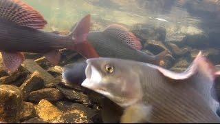 Рыбалка ловля хариуса / за 4 часа 2 ведра хариуса ленок / Сплав Сухой пит 2007 / Девственная тайга