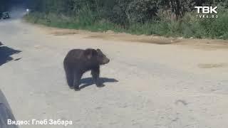 Медвежонок на трассе Северо-Енисейск (видео 3)