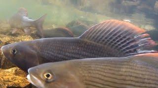 Сплав по реке Сухой пит 2 /Рыбалка ловля хариуса ленка тайменя / Красивая тайга / Охота на уток